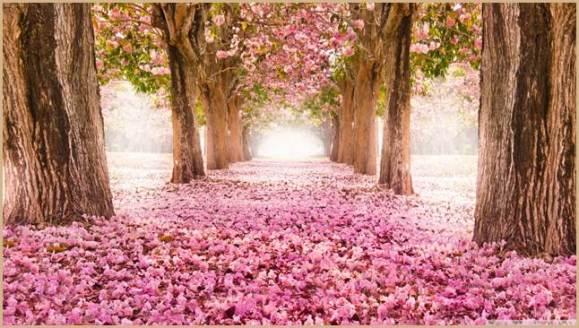 love_path-wallpaper-1366x768