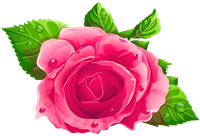Pink_Rose_PNG_Clipart